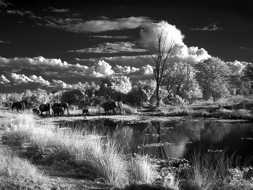 INFRARED - South Luangwa National Park - Africa