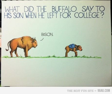 Be home soon, bison: Giggle, College, Funny Stuff, Humor, Things, Its, Smile