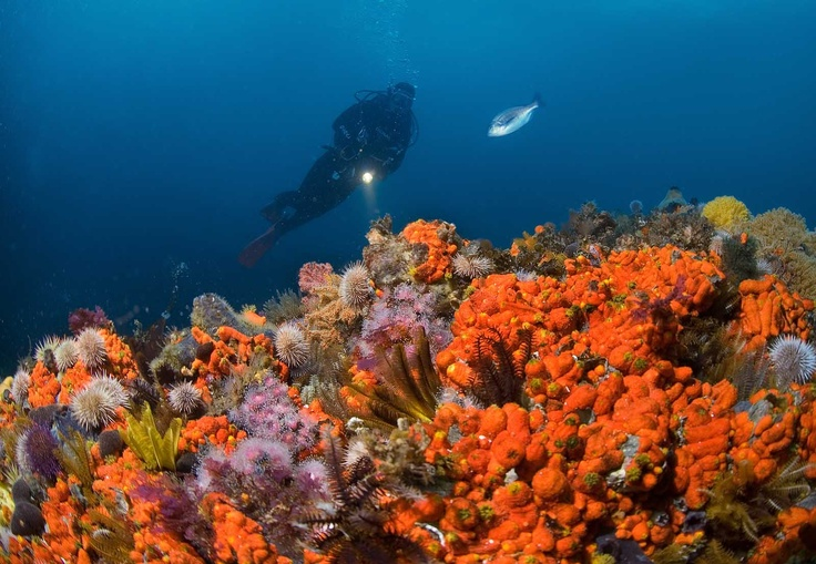 Typical reef scene at Simon's Town dive sites - Geoff Spiby at Batsata Maze