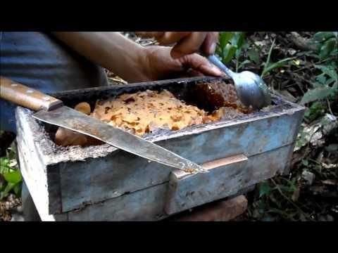 abelha jatai - YouTube