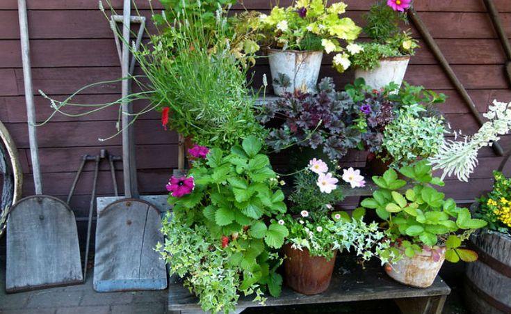Oito passos para fazer sua horta orgânica