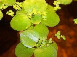 Low Light Freshwater Aquarium Plants:)