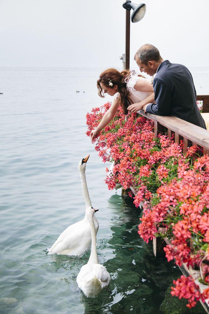 #Postboda en el Lago di Garda #trashthedress #weddingphoto #swan #cisnes #matrimonio a Italia  Foto por tilaq.com