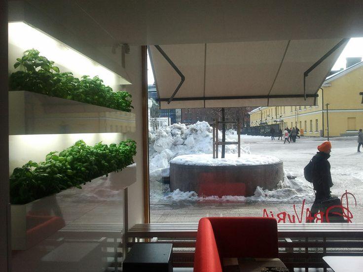 ZENGROW — Seinäpuutarhadesignia - HaLo | Lily.fi