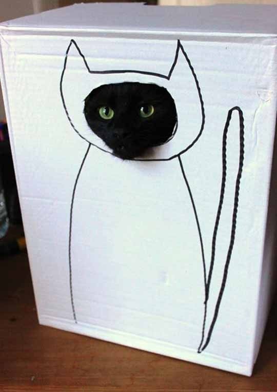 box-catCardboard Boxes, Funny Cat, Peek A Boos, Cut Out, So Funny, Hello Kitty, Black Cat, Animal, Baby Cat