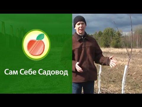 Ранневесеннее опрыскивание сада карбамидом (мочевиной) - YouTube