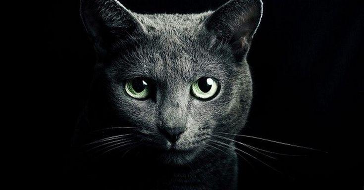 Dokáží nás kočky chránit před temnou silou, a dokonce nás léčit? Přečtěte si studii, která dokazuje, že kočka je opravdu posvátné zvíře.