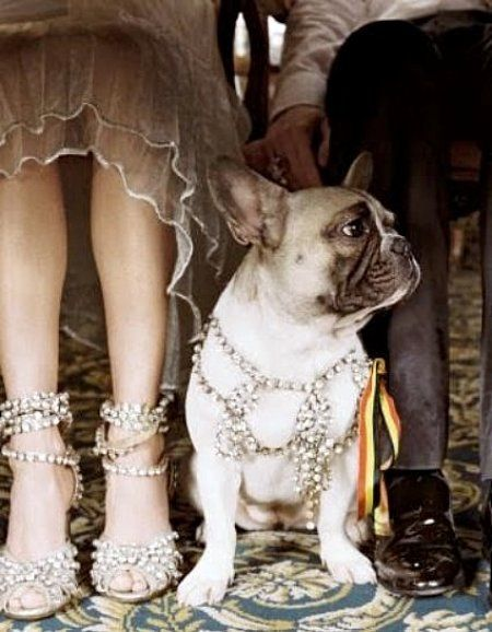 Jewels and bows?: Doggie, Best Friends, French Bulldogs, Pet, Bride Shoes, Jewels, Wedding Dogs, Animal, Bling Bling