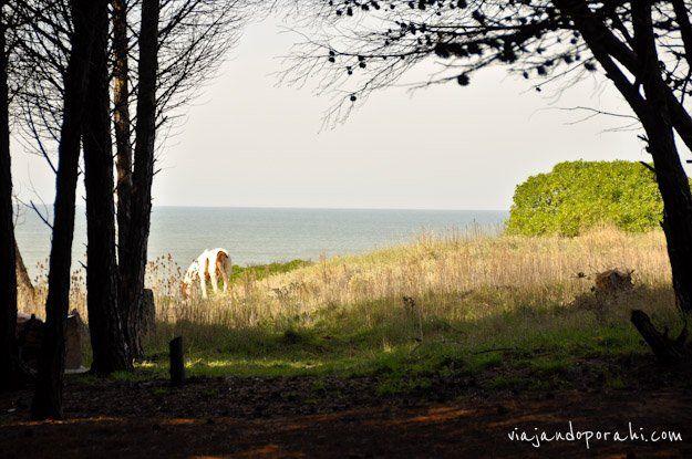 """Vivero de Miramar - Provincia de Buenos Aires.""""Al día siguiente nos fuimos caminando al bosque. Mientras nos metíamos entre sus árboles yo le conté a Damián acerca de los dos bosques encantados que conocí en mi vida: el de Calella (Catalunya) y el de las afueras de Skelleftea (Suecia). Ambos me parecieron mágicos por su atmósfera, por su silencio, por su luz. Y después de hacer burbujas gigantes entre sus árboles, el bosque de Miramar se convirtió en mi tercer bosque encantado. ."""