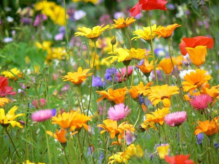 FIORI DI CAMPO - FIELD FLOWERS - FLEURES DE CHAMP - FLORES DE CAMPO