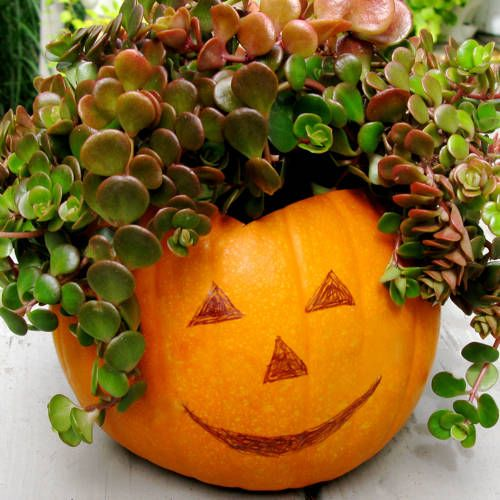 Pumpkin Planter with Stonecrop—perfect autumn container garden (@ About.com)
