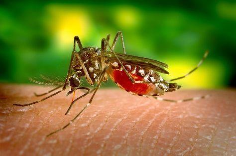 Remèdes maison pour calmer les démangeaisons de piqûre de moustique