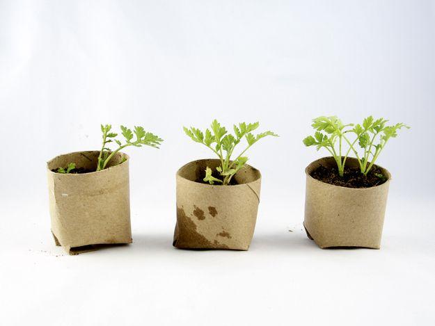 toilet paper seedling pots
