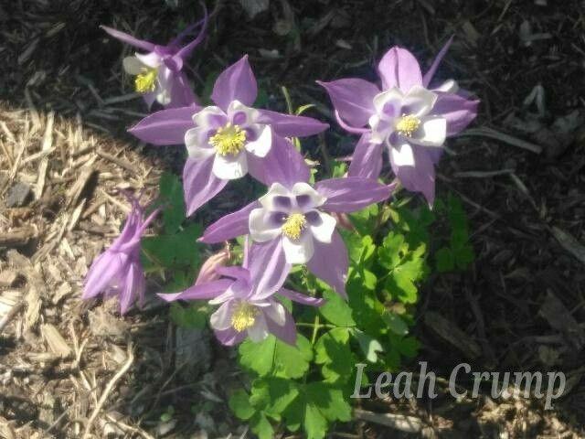Pin On Flower Plant Identification
