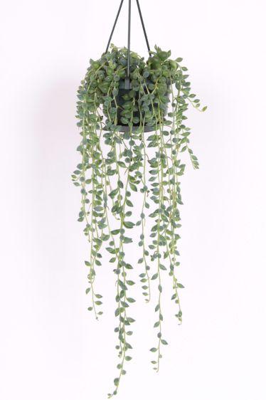 Hangplant Senecio | Hangplanten | Planten Kopen
