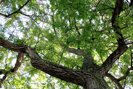 UNH Tree Walk Podcasts