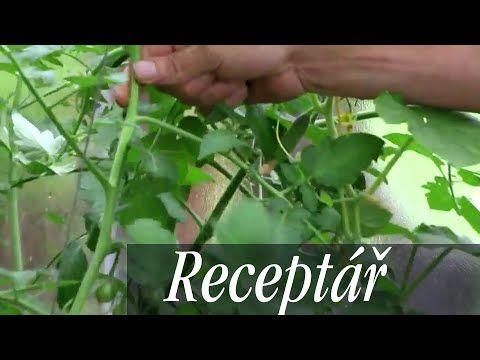 Video: Jak rajčata chránit před plísní? Jak je zaštipovat, aby hojně plodily? - Užitková zahrada