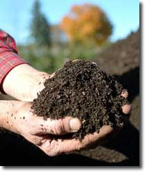 18-Day Compost – the Appliance of Science Permaculture Forums, Permaculture Courses, Permaculture Information & News