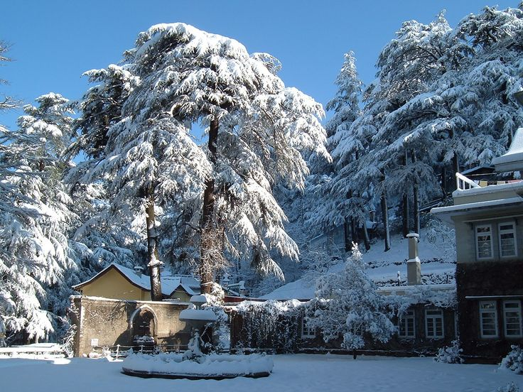 Shimla - Resorts