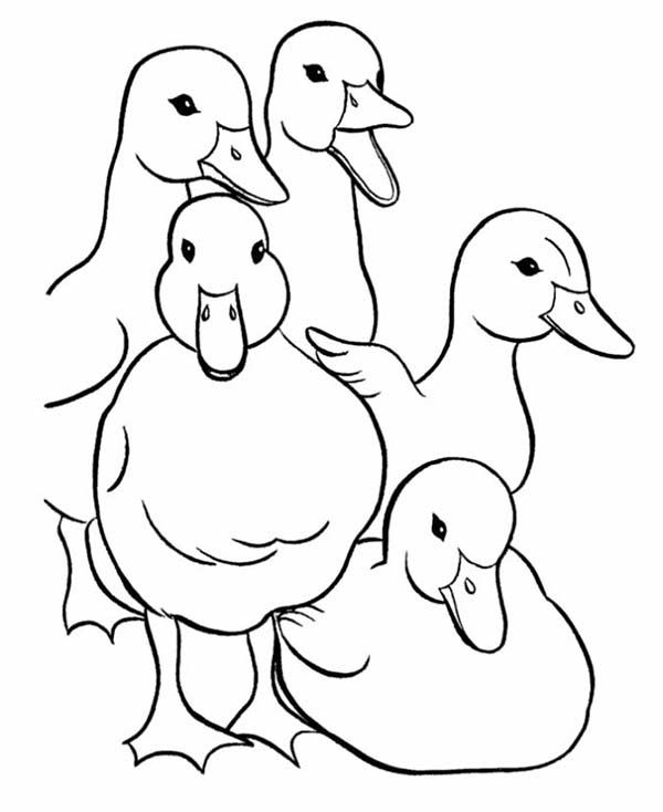 School Of Duckling Coloring Page