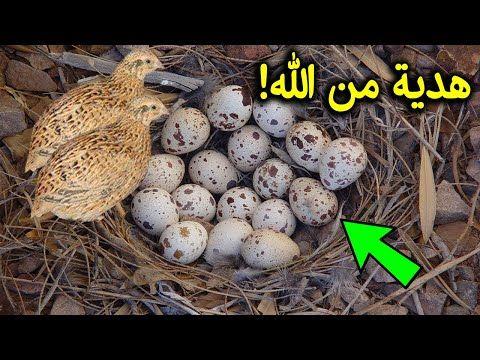 هل تعلم ماذا يحدث لجسمك عند أكل بيض السمان هدية من الله سبحان الله Youtube In 2021 Eggs Food Breakfast