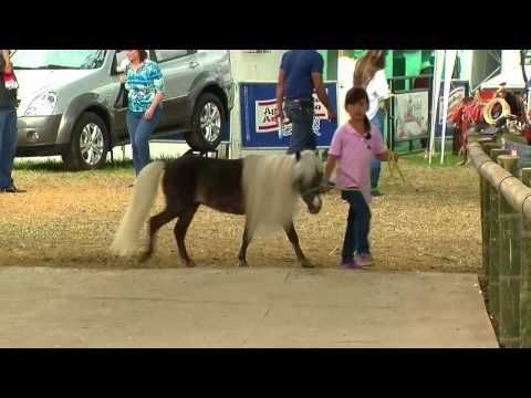 Caballos Miniatura - Mini Horses - Ponys - TvAgro por Juan Gonzalo Angel - YouTube