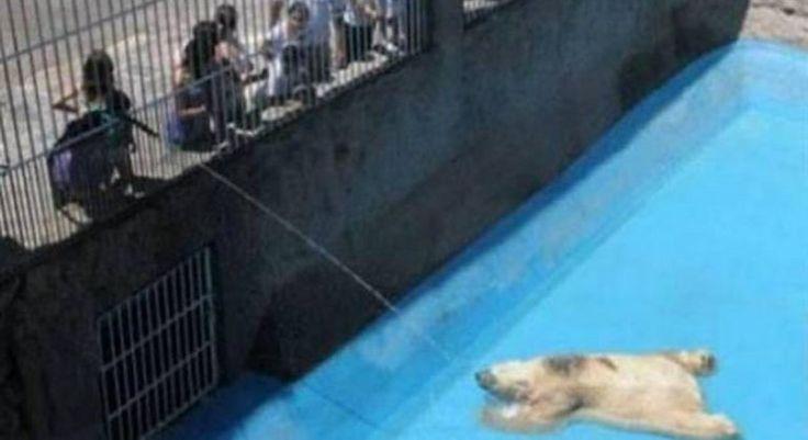 Argentina - Close the Mendoza Zoo. Los animales se encuentran en muy mal estado, son víctimas del maltrato y abandono uno de los casos mas conocidos es el del Oso Arturoy la semana pasada murió un hipopótamo por tragarse una bolsa de plástico.   Pedimos que se termine esto