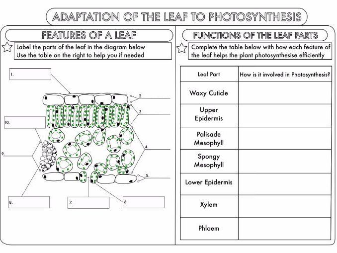 Pin on worksheets leaf structure