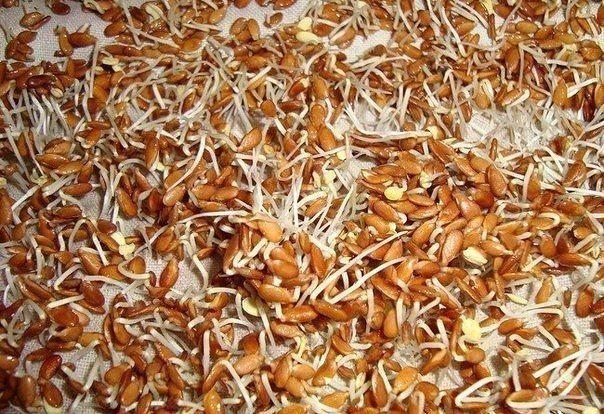 Семена льна - источник масла, по своему целебному действию, не имеющего аналогов в своем роде. Кроме того, они содержат слизистые вещества. Эти факторы и определяют основное свойство проростков льн…