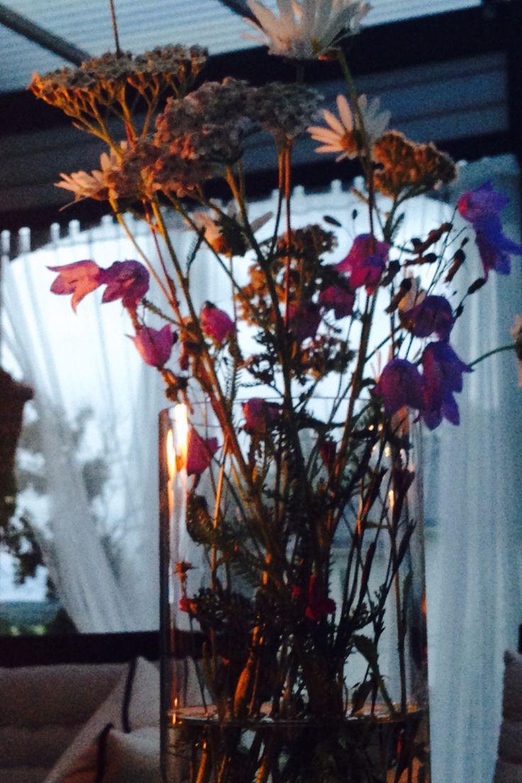 Sommarblommor en sommarkväll.