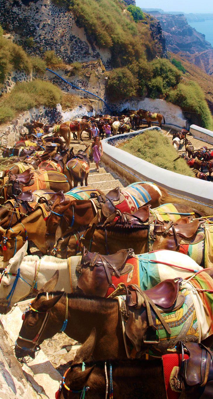 Mules for Tourists, Fira, Santorini http://www.house2book.com