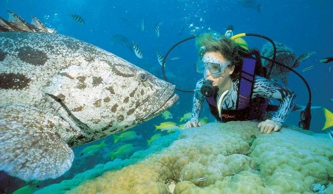 Dive Into The Great Barrier Reef