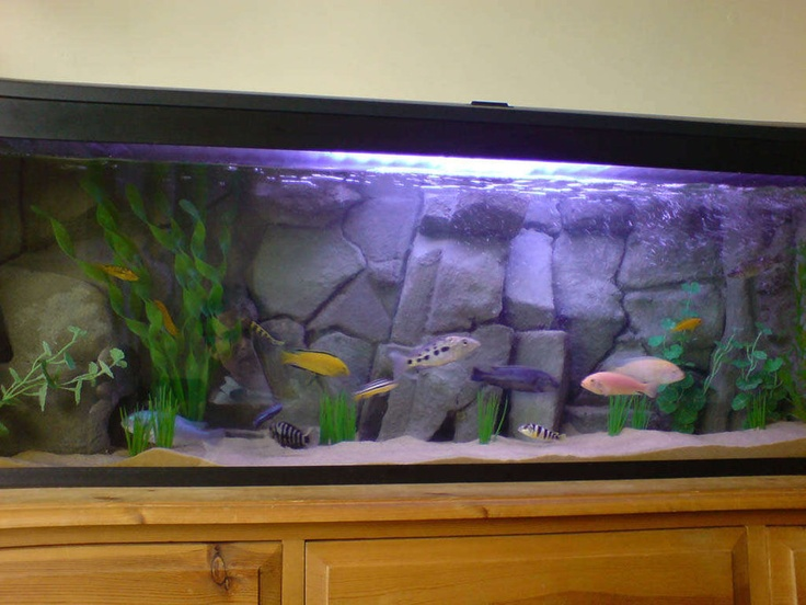 4ft tank with homemade 3D background. 1 marine white bulb and  blue actnic light to enhcnce the fishes colours. Several built in caves (with side views) mean the fish have places to hide and feel safe. The fake rock overhangs give a nice authentic feel and great shadows.