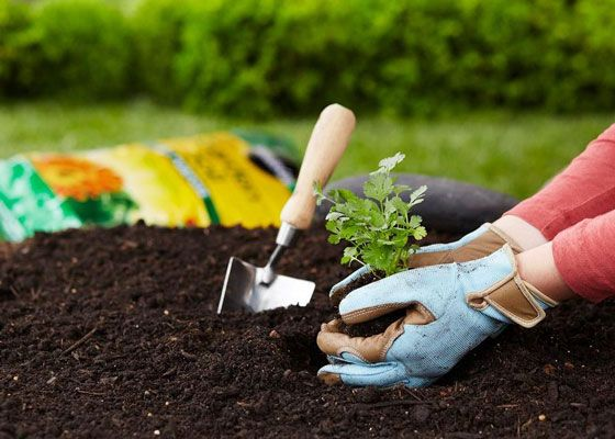 To Get The Most Out Of Your Vegetable Garden Do Research And Pull