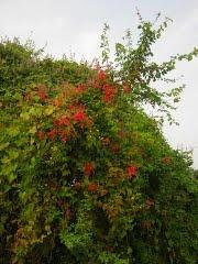 FOTOS DE TUXPAN (Tuxpan, Nayarit): Photos, De Photo, Photo De, Foto Pin-Up