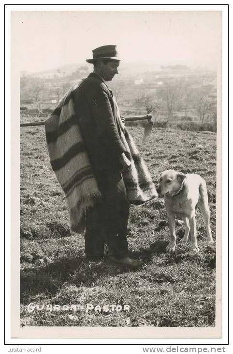 pastor com cobertor de papa, serra da estrela
