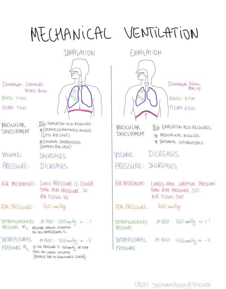 Mechanical Ventilation. How we breathe, volume, pressure etc Content credit: Suzanna Heinze Artist: Kateryna Tonyuk