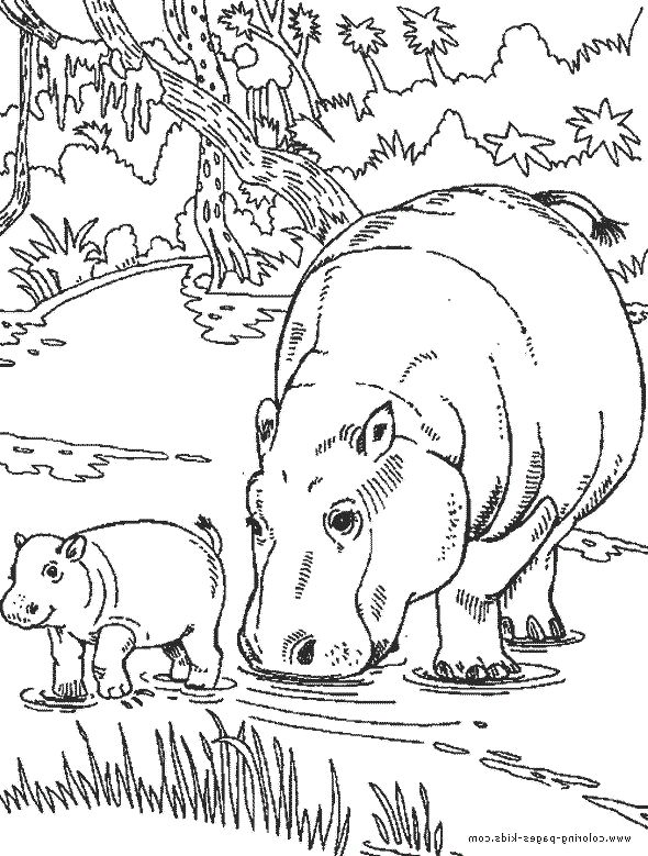 Baby Hippo Black And White Coloring Coloring Pages