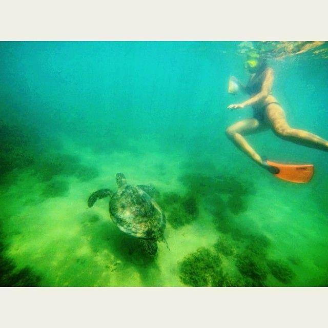 Hey turtle. #averyfrankadventure