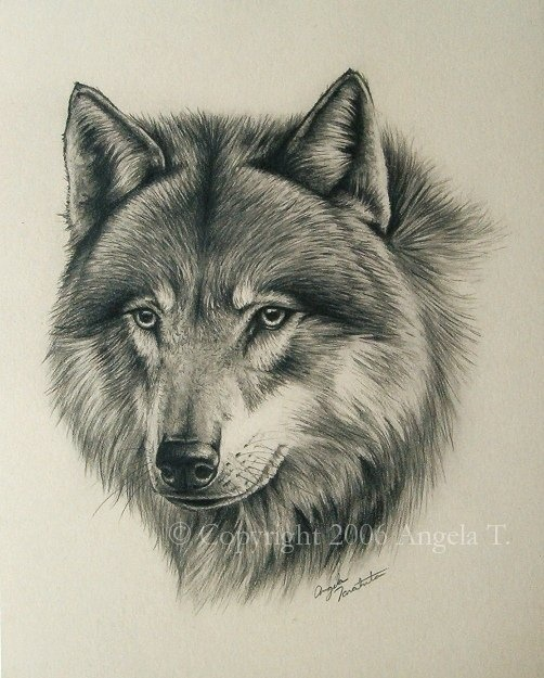 225 Best Images About WOLVES 2 DRAWING AND PAINTING On