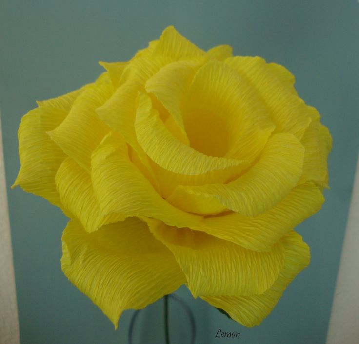 Rose Buds R20 each - Standard Rose R40 each - Giant Rose R150 each -  Colour/s of your choice