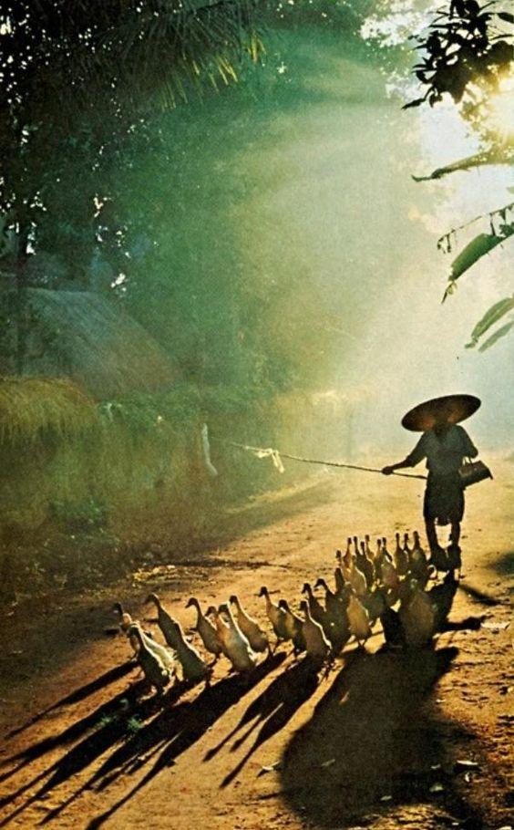 Balinese duckhearder.: