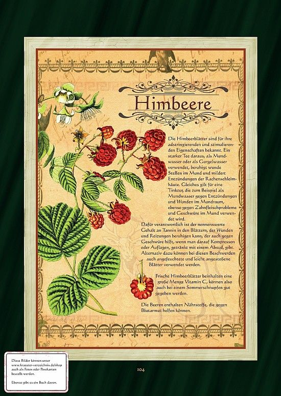 Himbeere - Himbeerblättertee