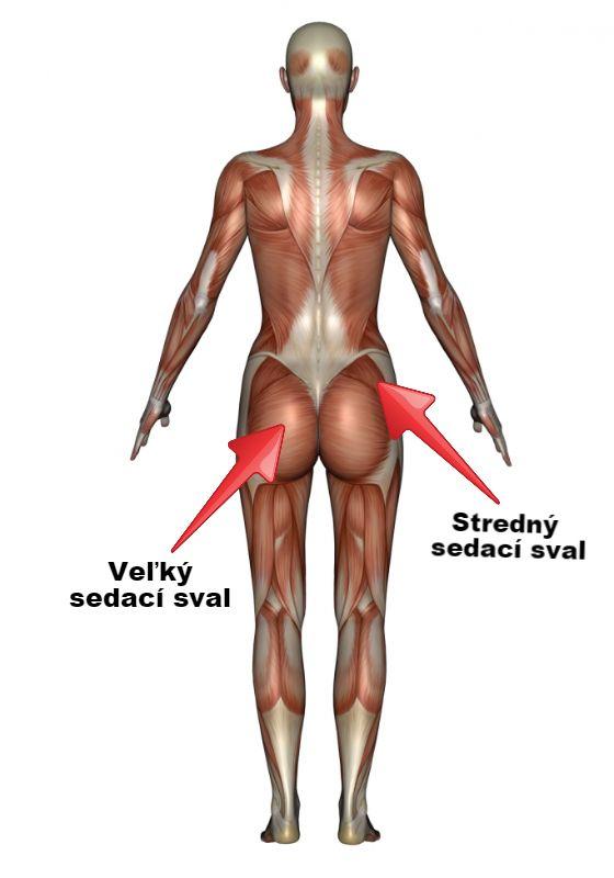 sedacie svaly