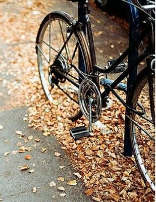 riding through bunches of crunchy leaves  what could be better? (besides zig-zagging furiously to hit every scattered leaf that might make a crunch)