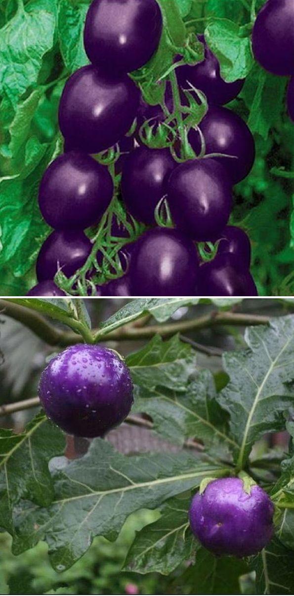 US$2.57 20pcs Seeds Purple Cherry Tomato Organic Fruit Vegetable Plant