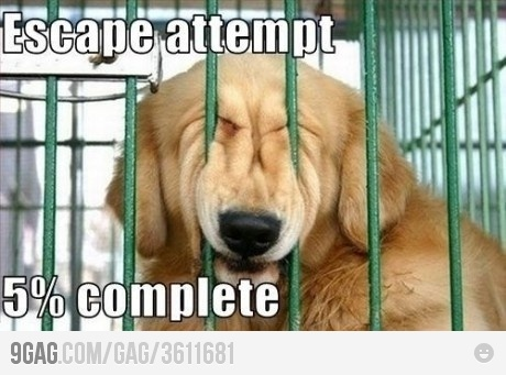 Escape!Puppies, Laugh, Funny Dogs, Silly Dogs, Dogs Memes, Funny Stuff, Funnydogs, Funny Animal, Escape Attempt