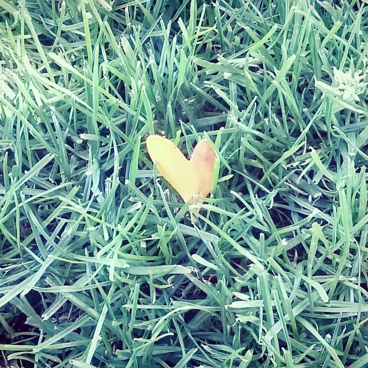 I found a  leaf nd its a shape as a heart
