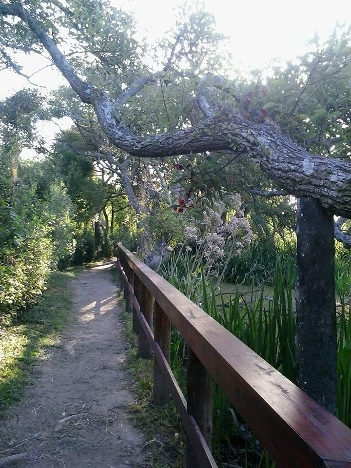 Reserva Natural Municipal Rivera Norte. San Isidro. Buenos Aires. Argentina.