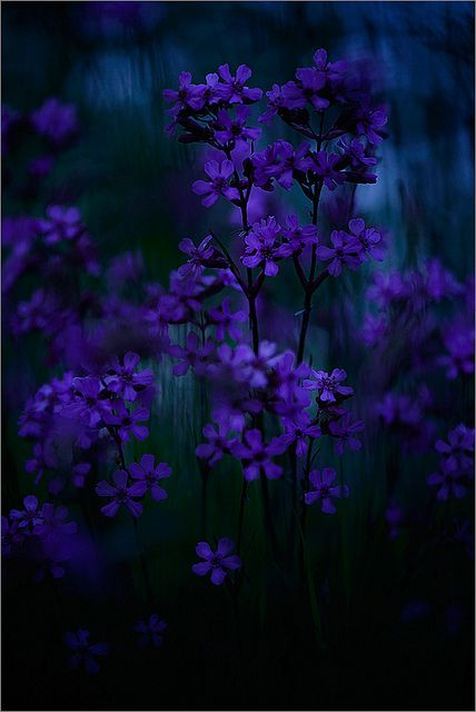 blooms-and-shrooms:  like stars in the night … by Sandra Bartocha on Flickr.